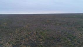Vídeo del abejón de la estepa Reserva de naturaleza de las tierras del negro de Chyornye Zemli metrajes
