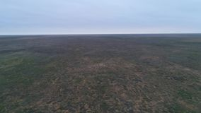 Vídeo del abejón de la estepa Reserva de naturaleza de las tierras del negro de Chyornye Zemli almacen de metraje de vídeo