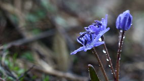 Vídeo del bosque de la primavera que llueve las flores metrajes