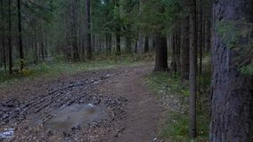 Vídeo del camino fangoso congelado en el bosque del abeto almacen de video