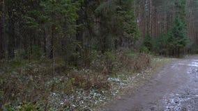 Vídeo del charco congelado bosque almacen de metraje de vídeo