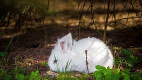 Vídeo del conejo blanco al aire libre almacen de metraje de vídeo