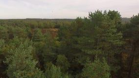 Vídeo del dron del bosque de la caza de Cannock metrajes