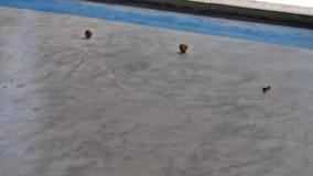 Vídeo del flujo de una bola de madera almacen de metraje de vídeo