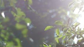 Vídeo del fondo, follaje verde, bañado en luz del sol radiante Los rayos del sol a través de la niebla, bokeh metrajes