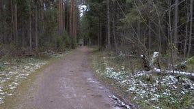 Vídeo del lío congelado bosque metrajes