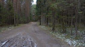 Vídeo del paisaje congelado bosque almacen de video