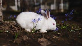 Vídeo del pequeño conejo blanco al aire libre almacen de metraje de vídeo