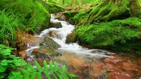 Vídeo del primer de un arroyo del bosque con alrededores cubiertos musgo metrajes