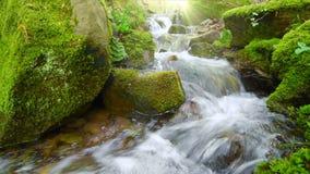 Vídeo del primer de un arroyo del bosque con los rayos de la luz del sol almacen de video