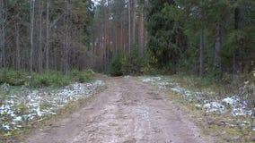 Vídeo del rastro sucio congelado en el bosque almacen de video