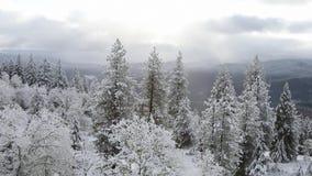 Vídeo do tempo HD do inverno de Oregon video estoque