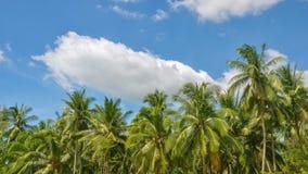vídeo do Tempo-lapso: O nebuloso movendo sobre o fundo do céu azul entre árvores de coco no dia da luz do sol filme