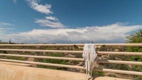 Vídeo do timelapse dos céus do deserto com crânio da vaca filme