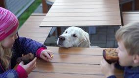 Vídeo engraçado - menina que alimenta seu cão no café animal-amigável com batatas fritas vídeos de arquivo