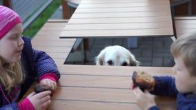 Vídeo engraçado - menina que alimenta seu cão no café animal-amigável com batatas fritas filme