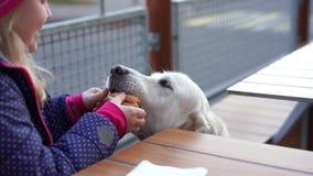 Vídeo engraçado - menina que alimenta seu cão no café animal-amigável com batatas fritas video estoque