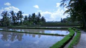 Vídeo escénico hermoso de la plantación del arroz en Ubud, Bali almacen de metraje de vídeo