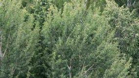 Vídeo hermoso de árboles verdes en el viento almacen de metraje de vídeo
