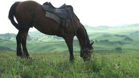 Vídeo hermoso de la puesta del sol de un caballo en las montañas de Altai almacen de metraje de vídeo