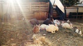 vídeo 4k de conejos y de pájaros nacionales en granja almacen de video