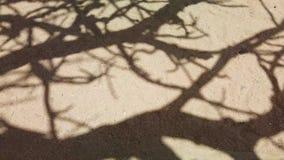 vídeo 4K de la sombra del árbol viejo grande del baobab en los llanos áridos de la sabana africana almacen de video