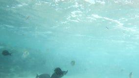 vídeo 4k de los pescados coloridos que nadan en agua de mar sucia en el arrecife de coral muerto almacen de video