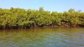 vídeo 4K de mangles en el delta del río tropical almacen de video