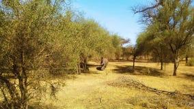 vídeo 4k del rinoceronte en sabana en el parque nacional, África metrajes