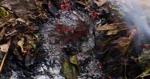 Vídeo loopable de Timelapse de uma folha verde ardente nas cinzas de uma pilha grande das folhas e dos galhos no outono em 4k 409 filme