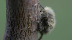 Vídeo macro del insecto almacen de metraje de vídeo
