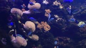Vídeo maravillosamente adornado de la cantidad de la acción de Marine Aquarium metrajes