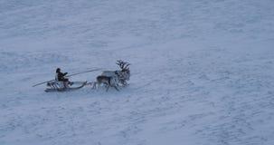 Vídeo maravilloso de un hombre en un trineo tener un paseo con los renos hermosos en el medio del ártico almacen de metraje de vídeo
