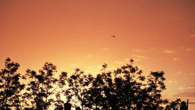 Vídeo no por do sol alaranjado sob a cidade vídeos de arquivo