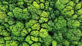 Vídeo panorâmico aéreo do zangão em 4K uma opinião do olho do ` s do pássaro à floresta com árvores e os arbustos verdes Panorâmi filme
