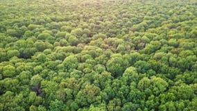 Vídeo panorâmico aéreo do zangão, uma opinião do olho do ` s do pássaro à floresta com plantações verdes de várias idades e altur vídeos de arquivo