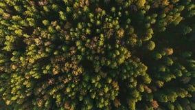 Vídeo panorâmico bonito sobre partes superiores da opinião superior da floresta do pinho vídeos de arquivo
