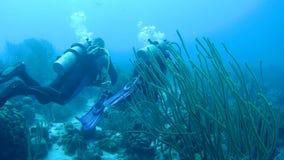 Vídeo subacuático 1080P del mar del Caribe de la gente que se zambulle metrajes