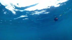 Vídeo subaquático do movimento lento de boias de ondulação do mar e de vida no dia ensolarado brilhante filme