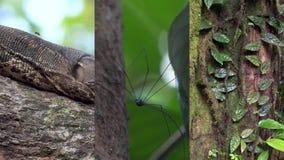 Vídeo vertical para los medios usos sociales en los dispositivos móviles Flora y fauna de los animales tropicales de la selva tro almacen de video