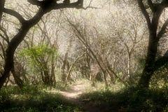 Víspera de Todos los Santos frecuentada Forrest con un resplandor Foto de archivo libre de regalías