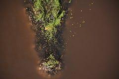 A vítima de espera do crocodilo na água imagens de stock royalty free