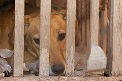 Vítima do cão do abuso e do mau trato animais imagem de stock royalty free