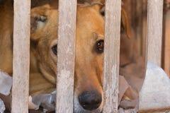 Vítima do cão do abuso e do mau trato animais imagens de stock royalty free