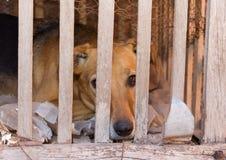 Vítima do cão do abuso e do mau trato animais imagem de stock