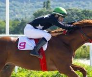 Vóór paardenrennen stock afbeeldingen