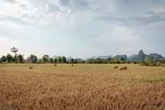 Vóór zonsondergang in Zuid-Laos Royalty-vrije Stock Afbeeldingen