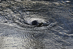 Vórtice del agua Imagen de archivo libre de regalías