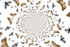 Vórtice del insecto ilustración del vector