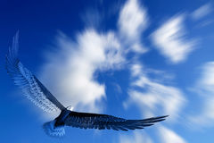 Vôo da águia fotos de stock
